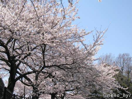 2012-04-11-11.jpg